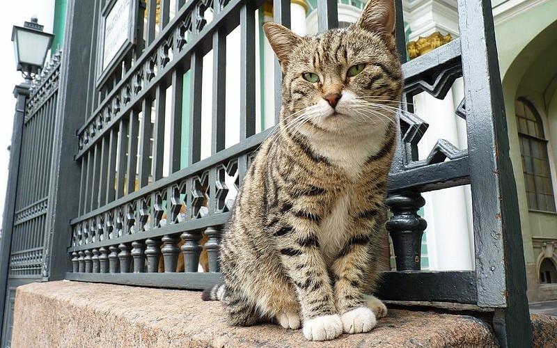 Escala de crucero en San Petersburgo: los gatos del Hermitage, los guardianes más felinos de la cultura